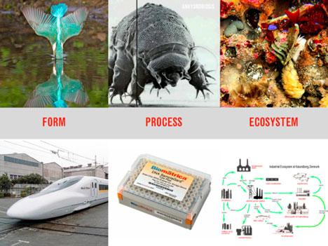 biomimicry_img1.jpg