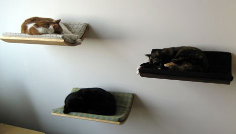 designer akemi elegant wallmounted cat perch is a far cry from the look of most feline beds