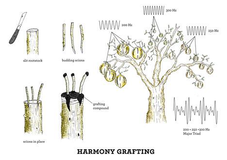 acousticbotany-grafting.jpg