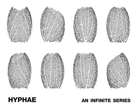nervous_system-hyphae-4.jpg