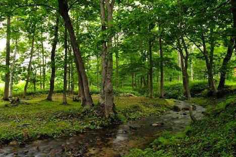 millenium_forest.jpeg