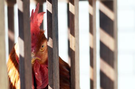 SebastianErrazuriz-ChickenChair-3.jpg