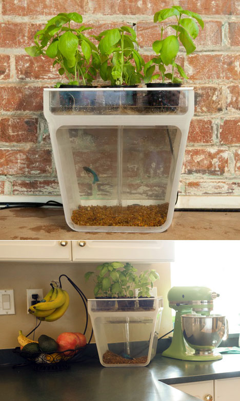 The Aquaponics Garden A Self Cleaning Fishtank that Provides
