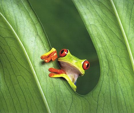 frog_vivarium.jpg