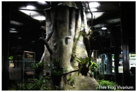 frog_vivarium1.jpg