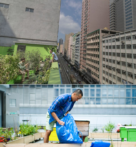 HK-farm.jpg