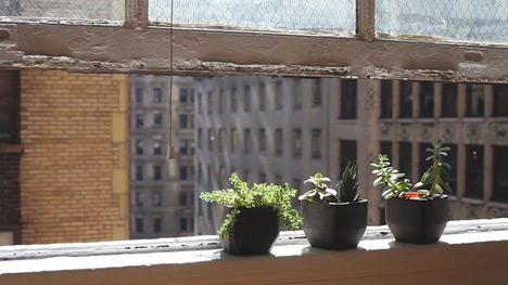 MatthewWaldman-Pothra-window.jpg