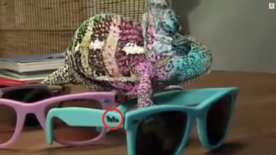 chameleons can change color but that video aint real - Color A Picture