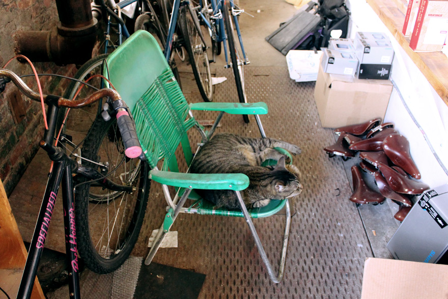ThomasCallahan-HorseCycles-shopcat.jpg