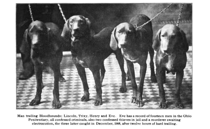 1907_AmericanBloodhound-880.jpg