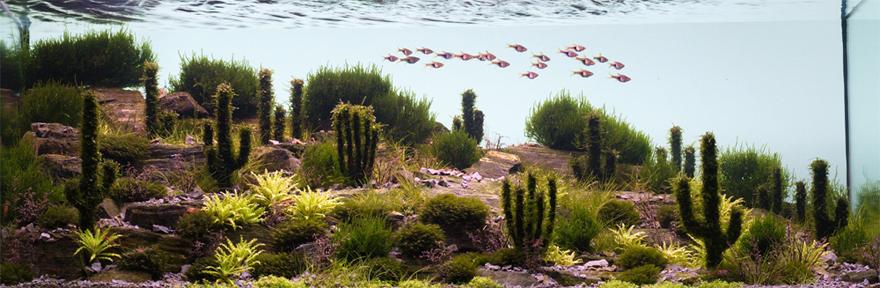 Aqua-Cacti.jpg