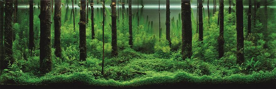 Aqua-Forest.jpg