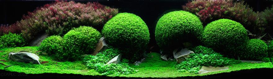 Aqua-Green.jpg