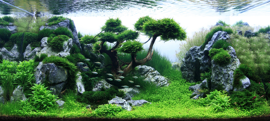 Competitive aquarium design the most beautiful sport you for Ada fish tank