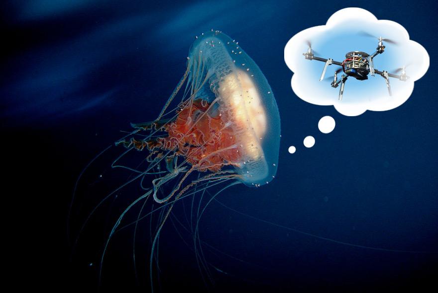 JellyfishDrone-Dreaming.jpg