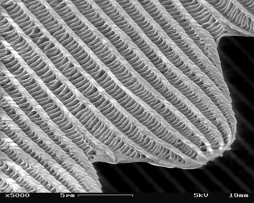 0PHOTO4_butterflywing.jpg