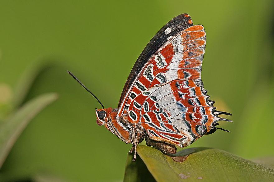 0PHOTO4a_butterflywing.jpg