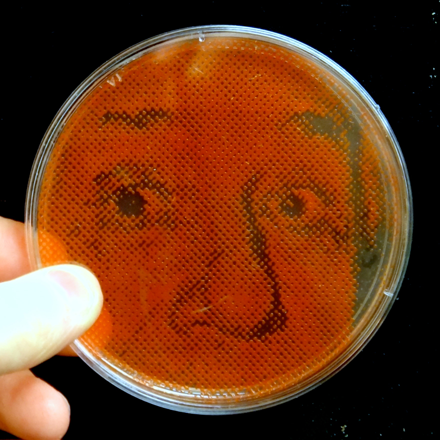 BacteriaArt-Detail.jpg