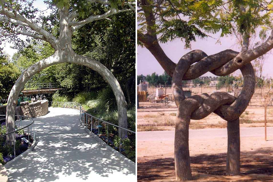 More crooked forests axel erlandson the tree tinkerer for Gilroy garden trees