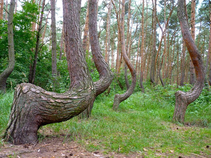 0crookedforest-003.jpg