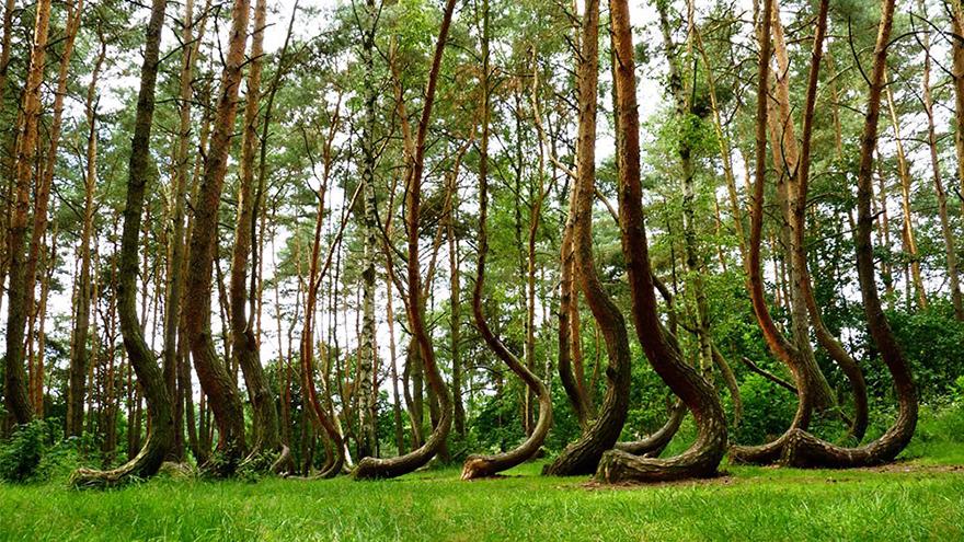 0crookedforest-004.jpg