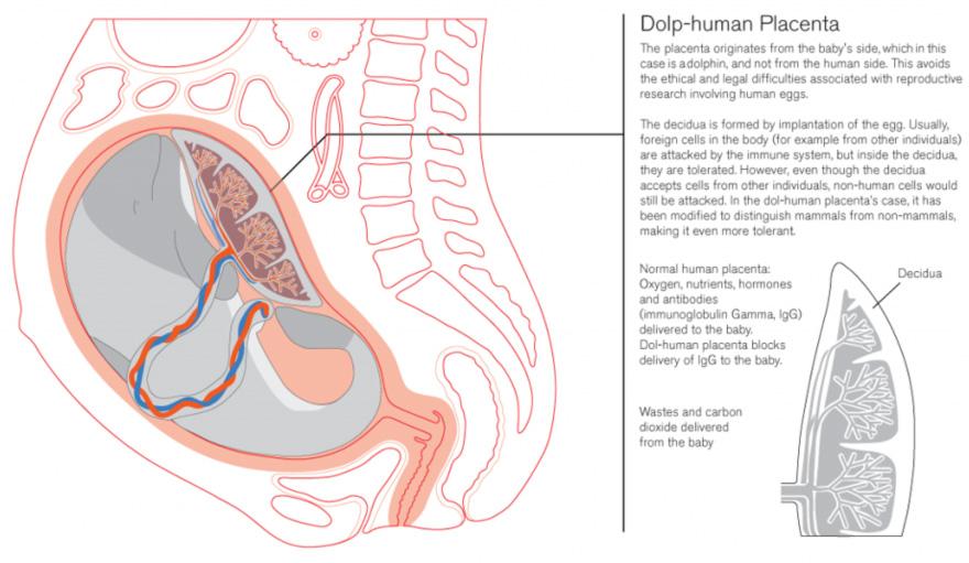DA2014-Sp-dolphin.jpg