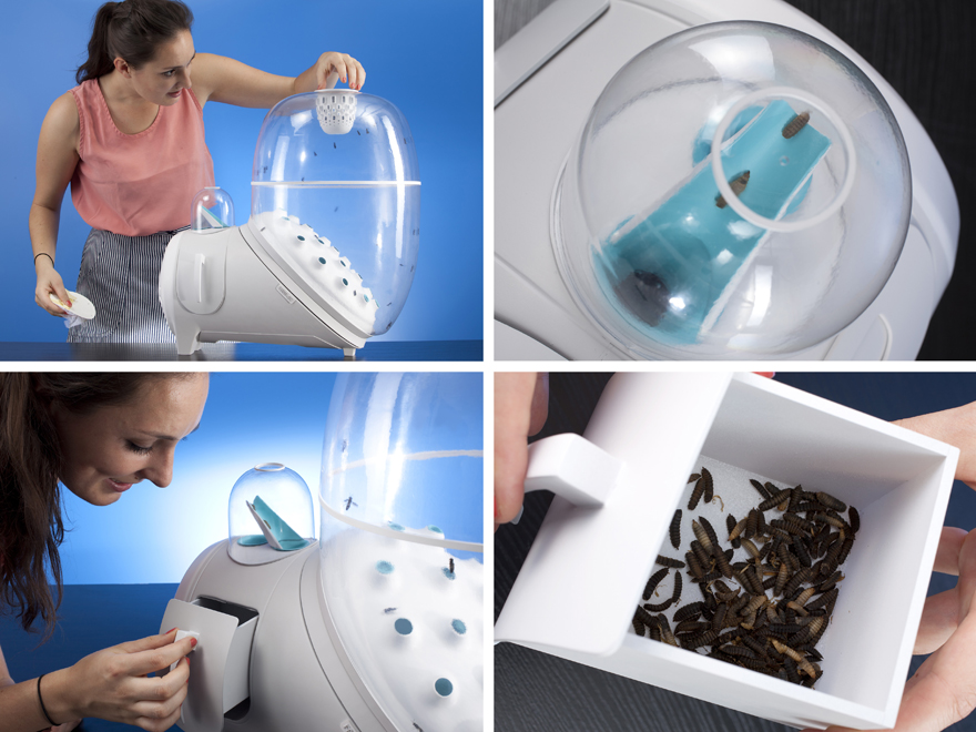 DARoundUps-InsectBreeding.jpg