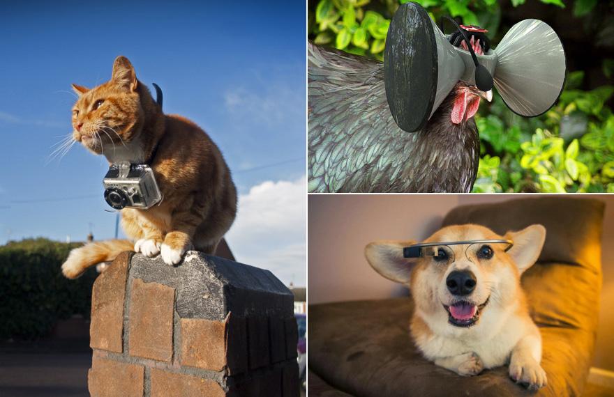 AnimalWearables-LeadImage.jpg