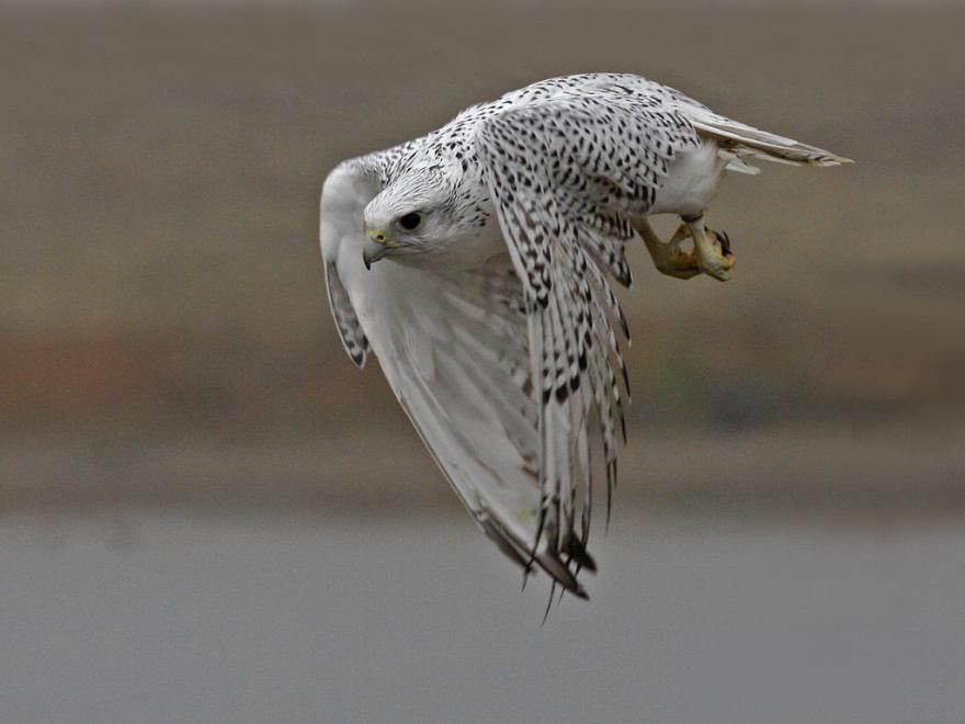 Rare, Majestic Bird Keeps Photobombing Northern Lights ...