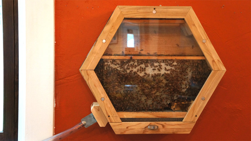 How to Harvest a Bee Hive from the Wilderness recommend