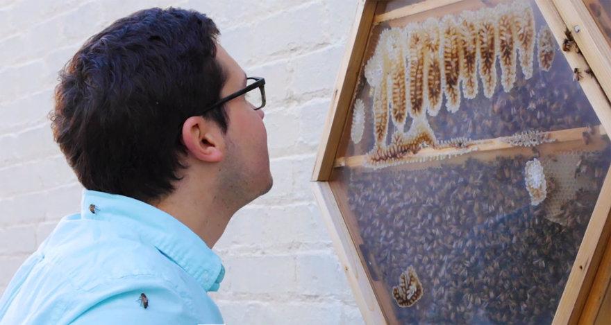 The Beecosystem: A Modular Indoor Honeybee Hive With Outdoor Commuting Tube