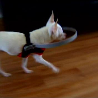 Brilliantly Simple Low Tech Device To Help Blind Dogs