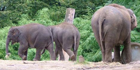 gg09-elephantpoop.jpg