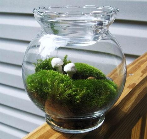 h2w_plants_terrarium3.jpg