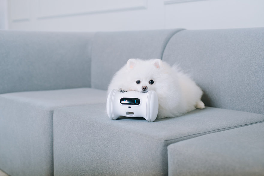 Reader Submitted: A Robot That Plays with Your Pets so They Don t Get Fat