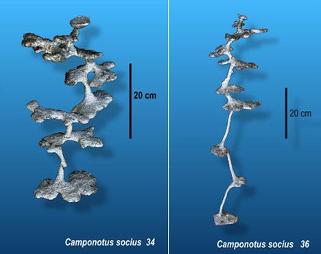Walter Tschinkel's Aluminum Casts of Ant Colonies Reveals