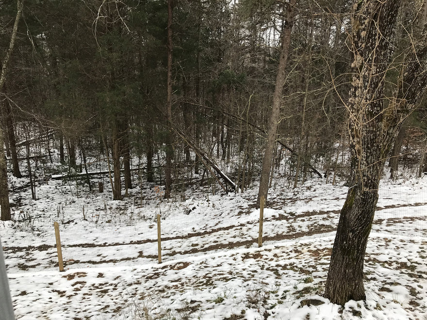 Rural Design Solutions: Figuring Out How to Fell a Leaning Tree Without a Chainsaw or Wedges