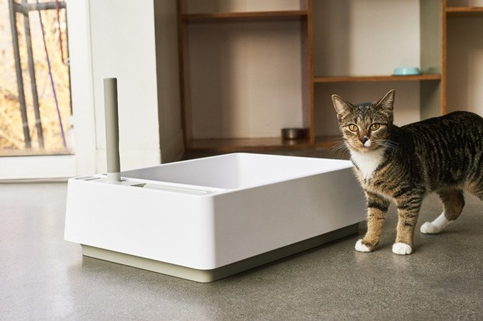 A Thoughtfully-Designed Litter Box for Cats Finds Kickstarter Success