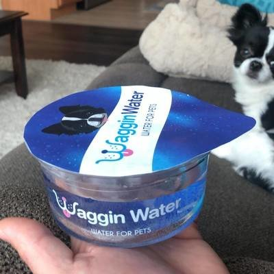 Hell in a Handbasket: Bottled Water for Dogs