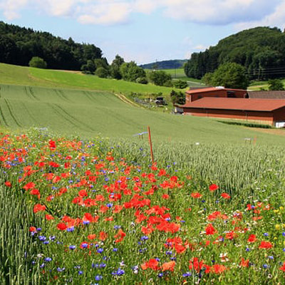 A Beautiful Solution: UK, Switzerland Experiment With Using Strips of Wildflowers as Natural Pesticides