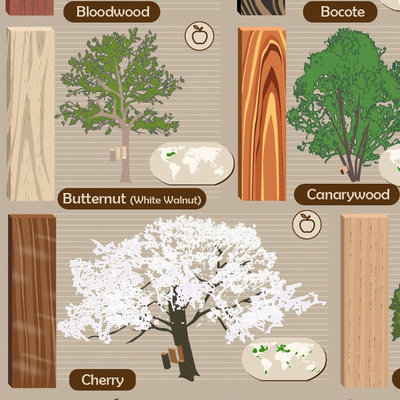 Visual Guide: What the Actual Trees of 52 Different Wood Species Look Like