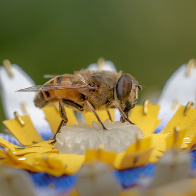 Hoverflies Have Needs Too, You Know