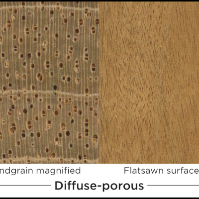 An Introduction To Wood Species, Part 1: Properties & Terminology