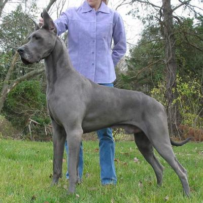 Downsides of Dog Design