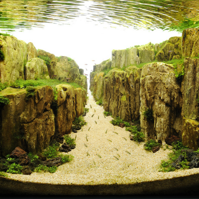 Competitive Aquarium Design: The Most Beautiful Sport You've (Probably) Never Heard Of