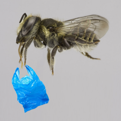 Bees Are Now Upcycling Plastic