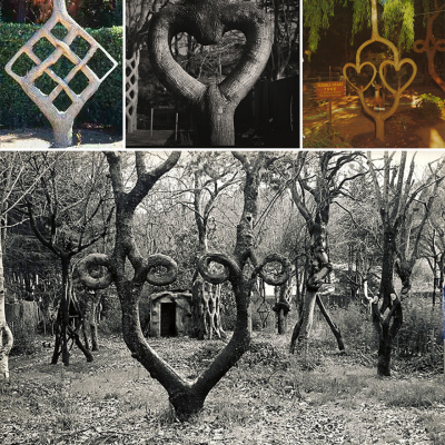 More Crooked Forests: Axel Erlandson, the Tree Tinkerer from the 1920s, and His Surviving Work