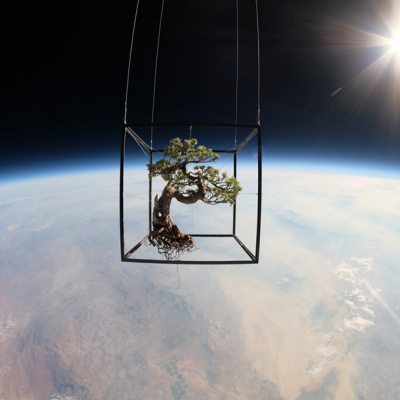 Started From the Stratosphere Now We're Here: Bonsai in Space