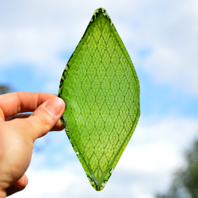 Breaking: Art Student Makes Synthetic Leaf, Solves Everything