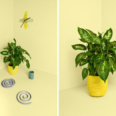 In the Details: Good Thing Reinvents the Ceramic Coil Pot, Among Other Household Goods
